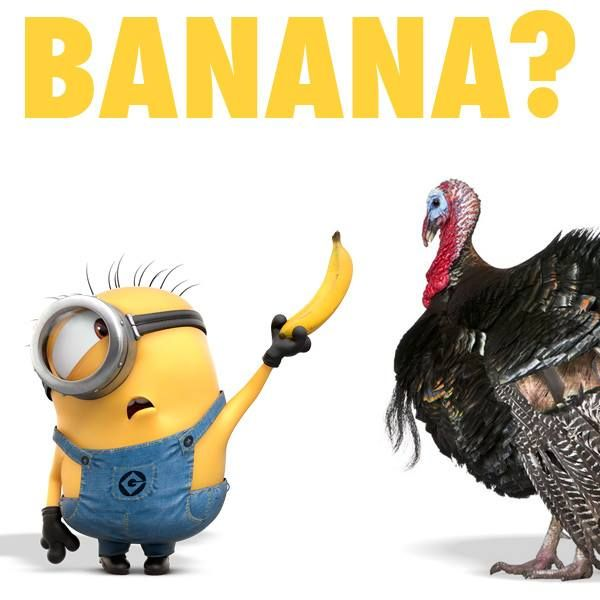 Happy Thanksgiving From The Minions, banana, turkey?。◕‿◕。 See my Despicable Me Minions pins https://www.pinterest.com/search/my_pins/?q=minions The hottest Group board on Pinterest! https://www.pinterest.com/busyqueen4u/pinterest-group-u-pin-it-here/