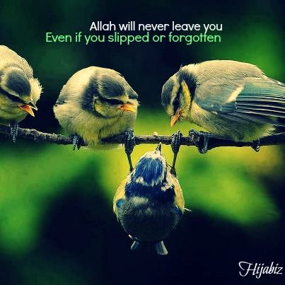 Allah will remember you, remind you and never leave...