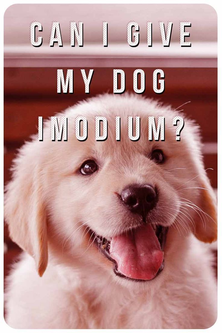 Imodium For Dogs Can You Give A Dog Imodium And What S The