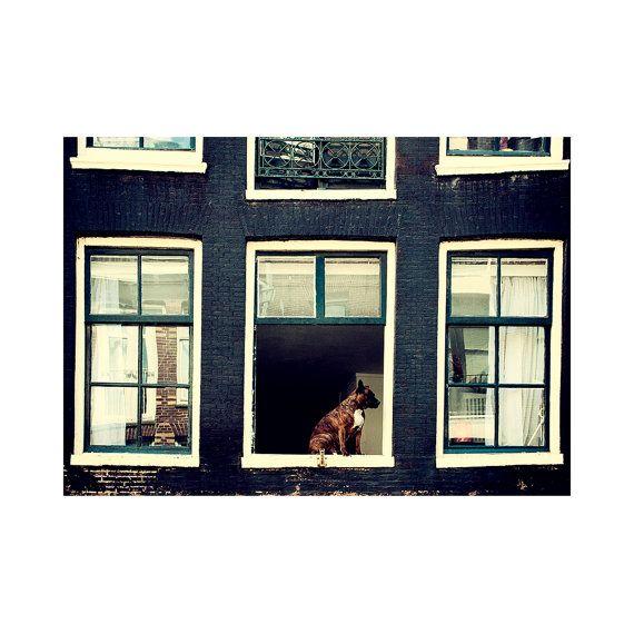 Amsterdam fine art photography / Dog photo / Street photography / Fine art print / Home decor / Wall art print