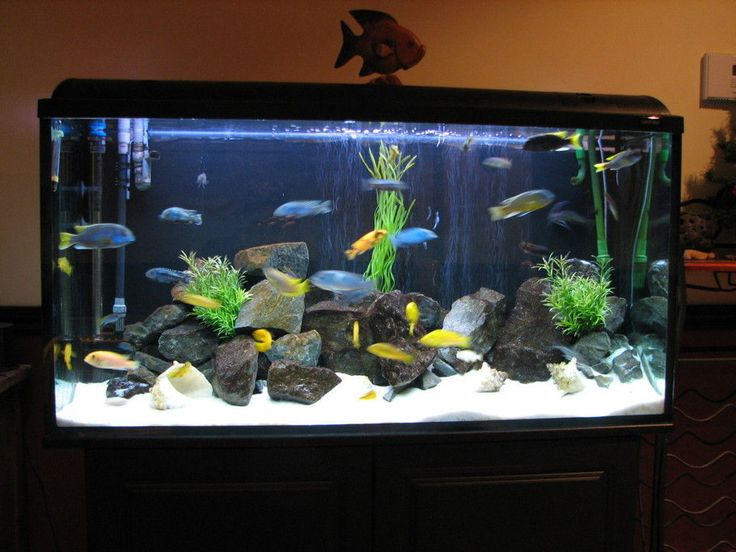 17 best images about fish tank on pinterest for Cichlid fish tank