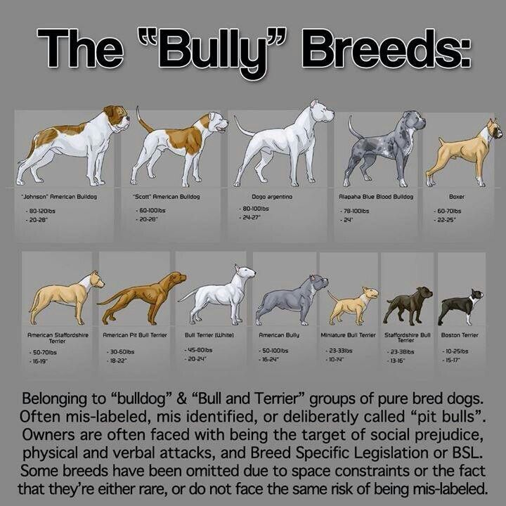 """dog chart?: The """"Bully"""" Breeds"""