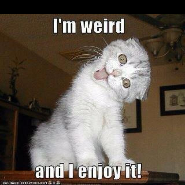 Funny Cat Sayings Quotes: 37 Best Weird Cats Images On Pinterest