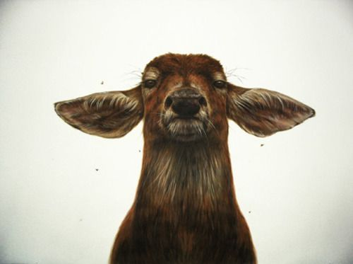 he's looking like a thugLike A Boss, George Booruji, Animal Photography, Art, Deer Head, Georgebooruji, Ears, Portraits, Contemporary Design