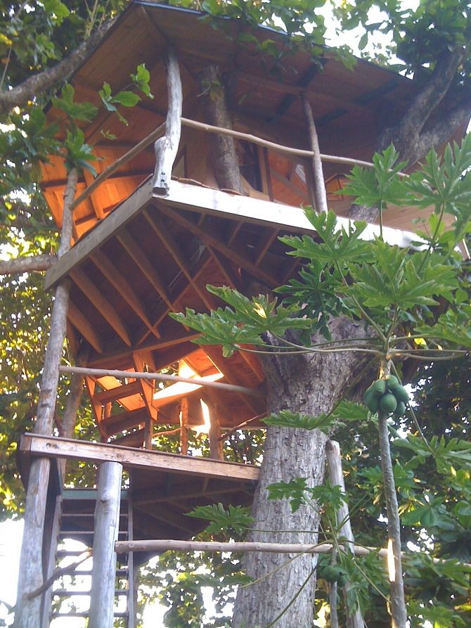 Insane Tree Houses 2517 best build a tree house images on pinterest | treehouses