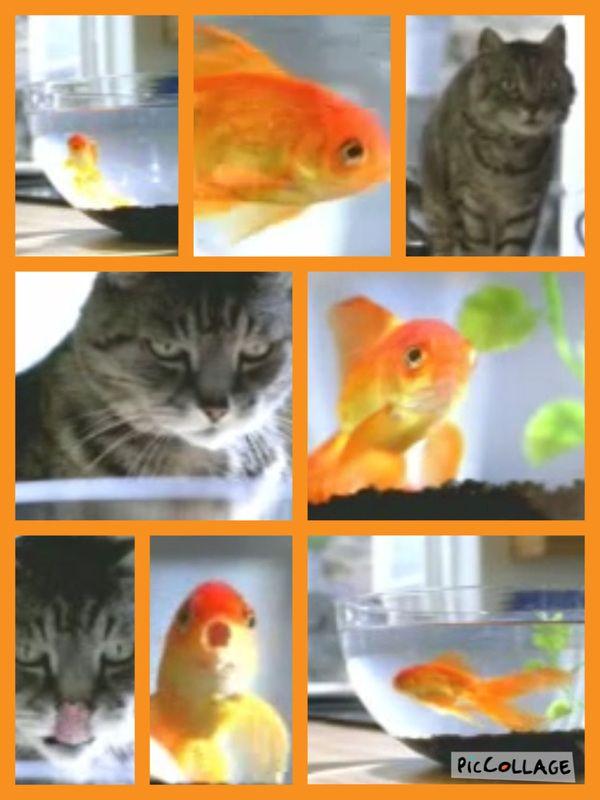 Hay un pez. dorado. El pez dorado nada solo. El pez dorado nada mucho. Hay un gato gris. El gato gris observa el pez dorado. El pez dorado observa el gato gris. El gato gris tiene hambre . El...