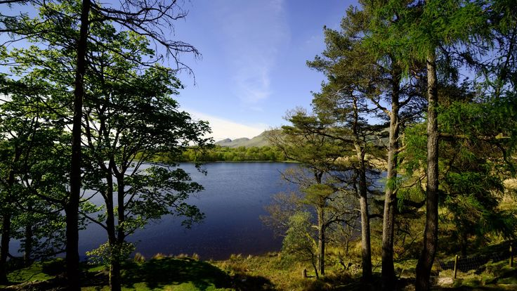 Скачать обои озеро, деревья, берег, Glasgow, Шотландия, раздел пейзажи в разрешении 1920x1080
