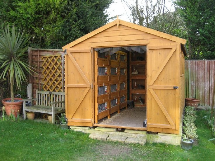 Building a rabbit shed and need help... - Rabbits Online