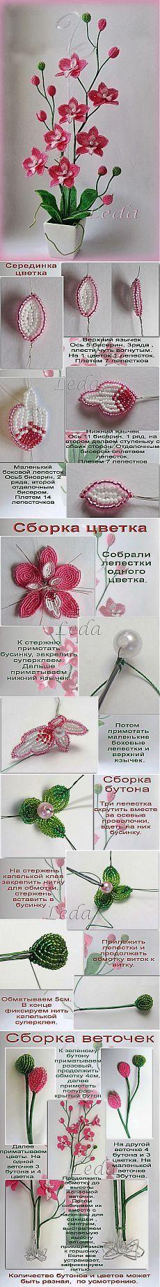 Как плести орхидею из бисера. Пошаговое плетение орхидеи из бисера | Laboratory household