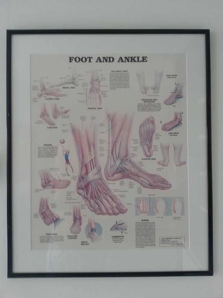 Vintage poster anatomie voet ingelijst met passe-partout.   Afm. 65,5 x 79 cm € 35,00  www.facebook.com/stoeruhzaken.nl