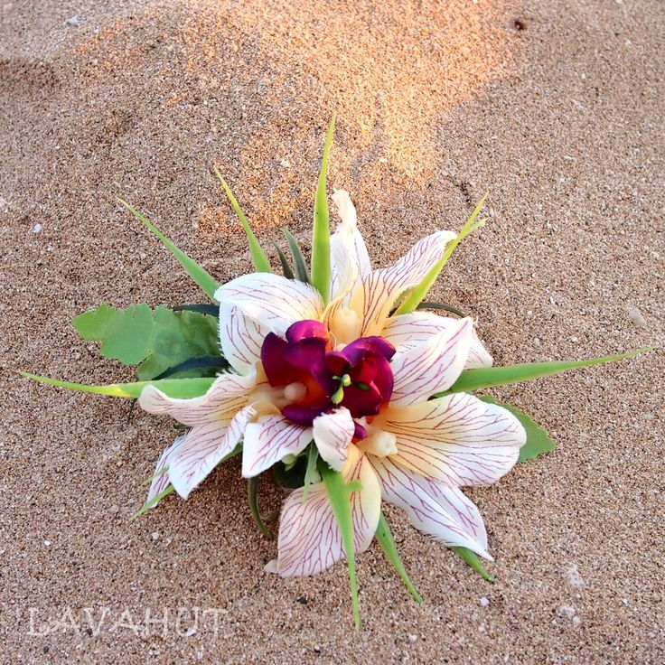 Cattleya Cream Hawaiian Flower Hair Clip