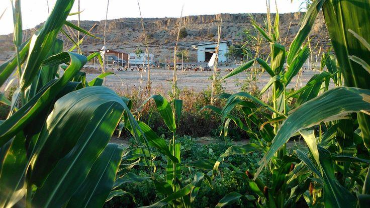 Productos de temporada de cultivos tradicionales, frutas y verduras ecológicas en Mutxamel, Alicante.
