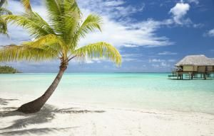 What Are Some Common Types of Palm Trees?: Palm tree on tropical beach.