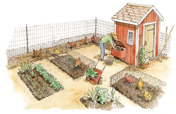 Chickens in the Garden: Eggs, Meat, Chicken Manure Fertilizer and More - Organic Gardening - MOTHER EARTH NEWS