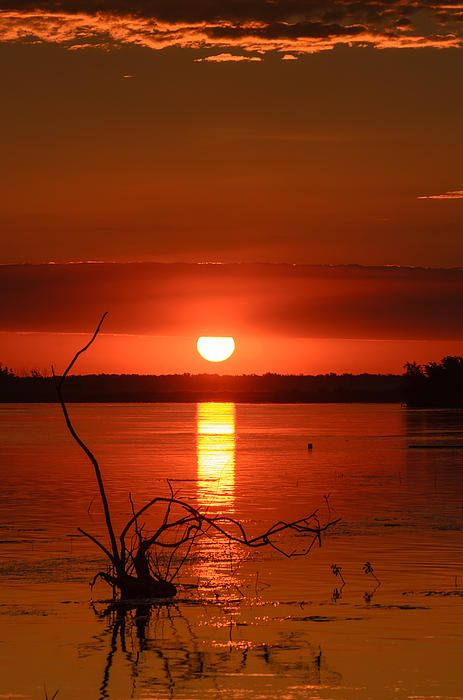 Print for sale. Sunrise in Danube Delta, Romania. Beautiful red and orange with an old trunk in foreground.
