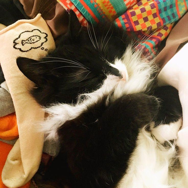 """くらのすけさんのツイート: """"取り込んだ洗濯物の中で幸せそうに寝てるな~と思ったら、靴下の柄が大変良い仕事をしてた https://t.co/1ODGxcPBqj"""""""