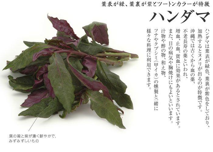 ハンダマの特徴 パルダマ、石川県金沢は 「金時草(きんじそう)」 熊本では「水前寺菜」、愛知では「式部草」
