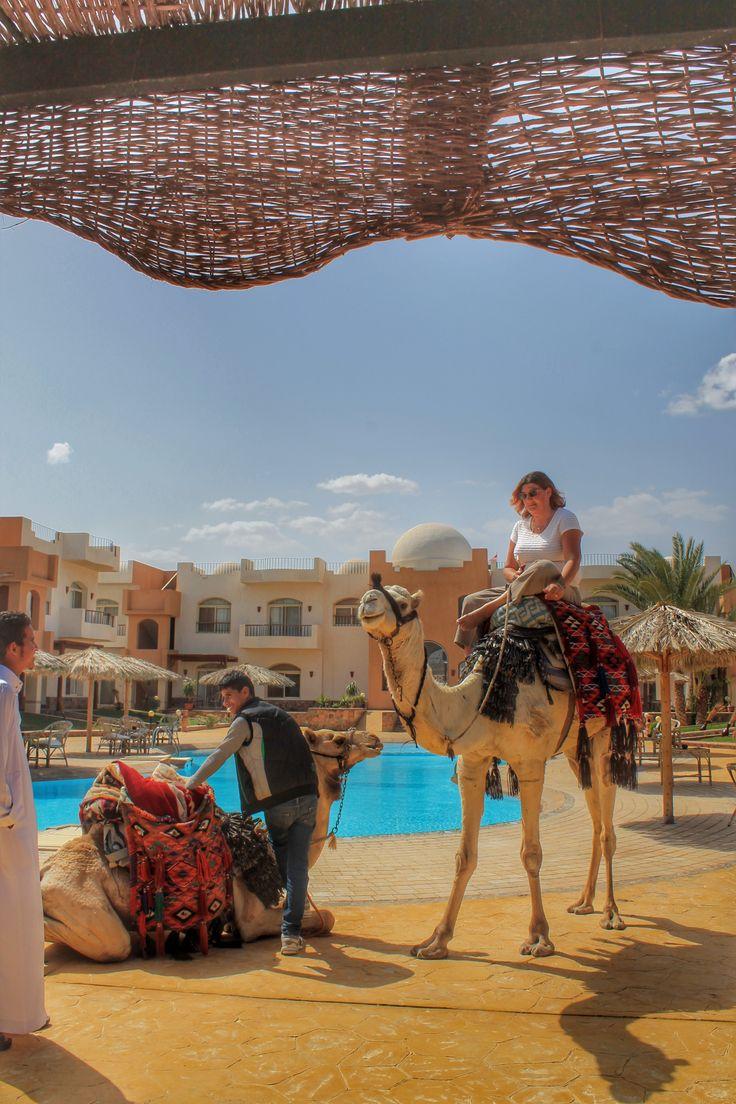 Live like a local, ride a camel. #Dahab #Sinai #travel  #Egypt #nomad #desert