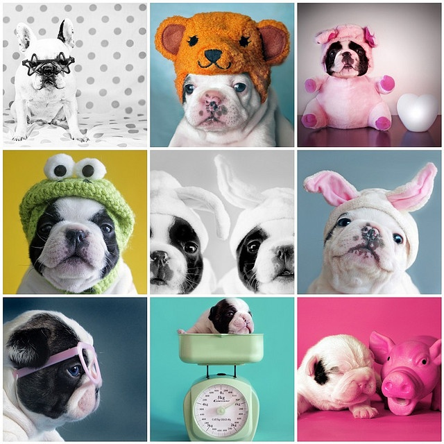 @Cindy Eaton - Let's dress your Frenchies up!