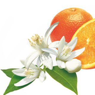 Fleur d'Oranger  Description: De Lampe Berger Fleur d'Oranger - Orange Blossom roept zowel de zonovergoten Middelandse Zee op als zoet oosters gebak en omarmt de vele facetten van deze onweerstaanbare bloesem. Opbouw van de noten: De parfums van Lampe Berger zijn uit drie delen opgebouwd. De drie delen topnoot middennoot en basisnoot beschrijven de noten die je ruikt naarmate het parfum zich ontwikkelt in de tijd. Topnoot Middennoot Basisnoot : Groene planten Oranjebloesem : Neroli…