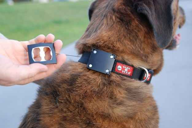 Your dog is your best friend and he wants you to enjoy a nice bottle of beer: let him help you out with this dog collar (it comes with a bottle opener).