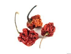 Chile, Trinidad (Moruga) Scorpion, Whole - Buy Spices Online | Savory Spice Shop