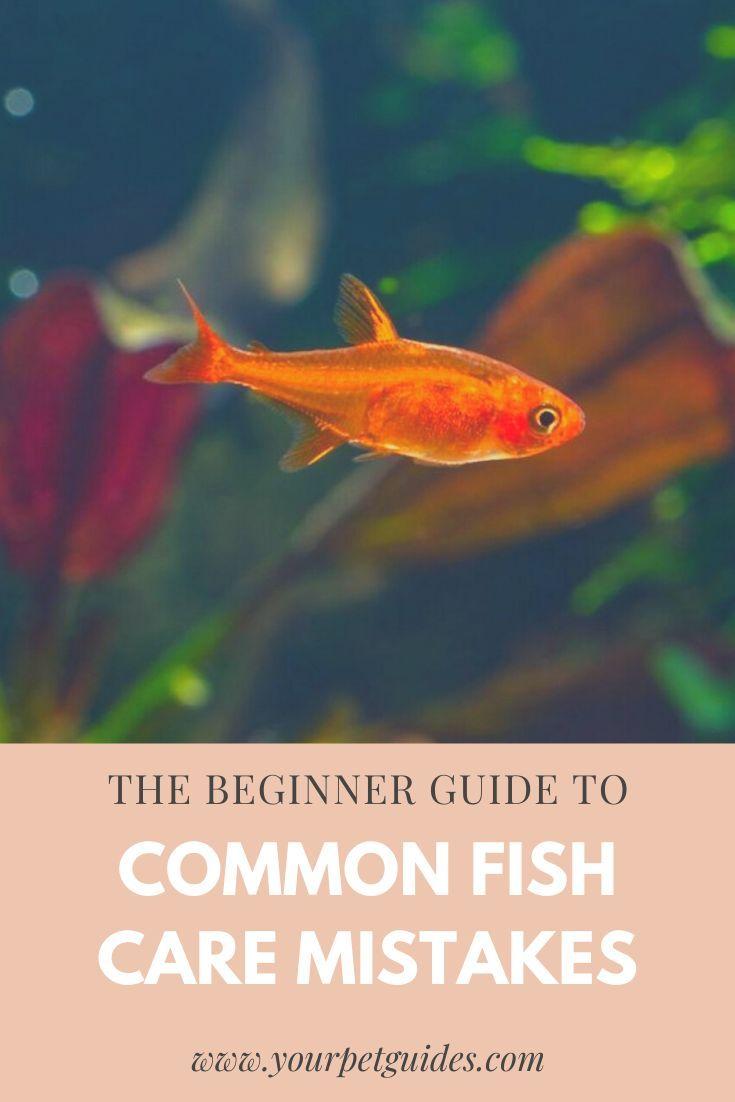Neglecting Your Aquarium Www Yourpetguides Com Fish Care Pet Fish Fish Tank