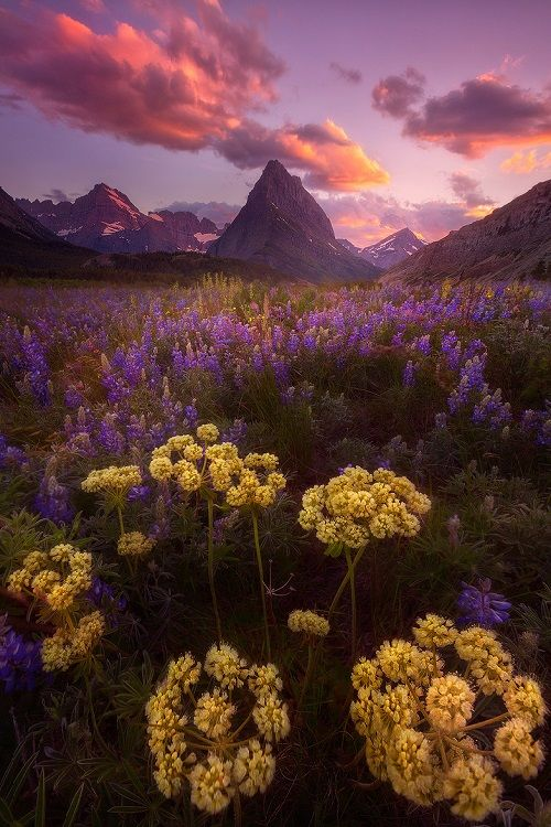 """ponderation: """" Windy Meadows by Patrick Marson Ong Photographer's Website """""""
