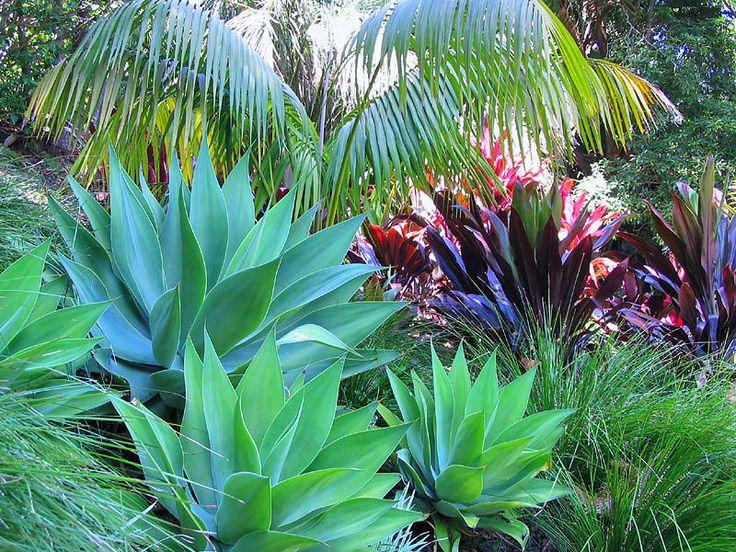 Tropical Garden Ideas best 20 tropical gardens ideas on pinterest Best 25 Small Tropical Gardens Ideas On Pinterest