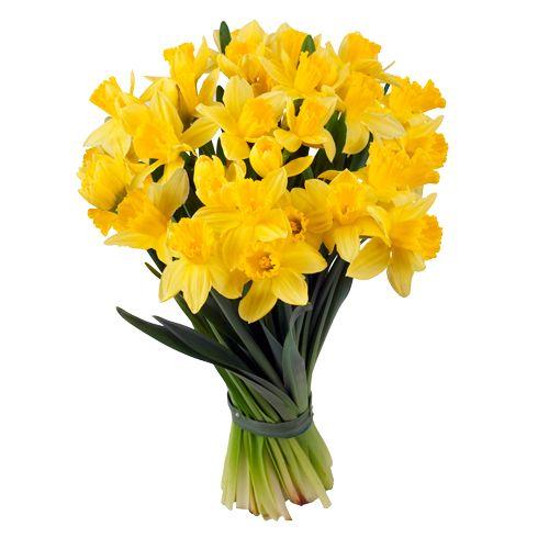 """""""Il y a des fleurs partout à qui veut bien les voir"""" H.Matisse  Telle une œuvre du célèbre peintre coloriste, Matisse est une composition énergique et joyeuse. Bouquet festif et puissant cette fraîche brassée de jonquilles relègue définitivement les frimas de l'hiver. Bouquet stimulant à offrir sans modération !"""