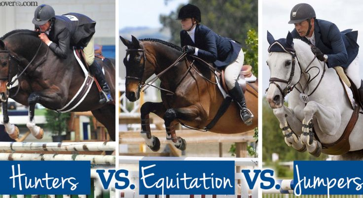 Hunters vs Equitation vs Jumpers