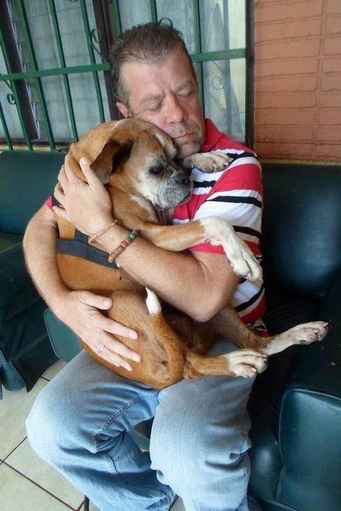 Man's amazing reunion with the sweet Boxer dog he rescued off the streets (PHOTOS) » DogHeirs   Where Dogs Are Family « Keywords: Boxer, lost dog, Costa Rica, viral photo