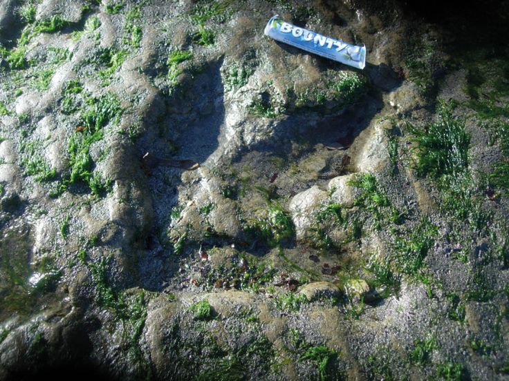 Dinosaurs footprints on the Isle of Skye Scotland