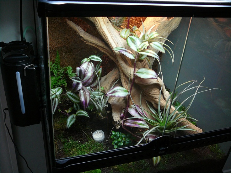 25 best images about vivariums and terrariums on pinterest. Black Bedroom Furniture Sets. Home Design Ideas