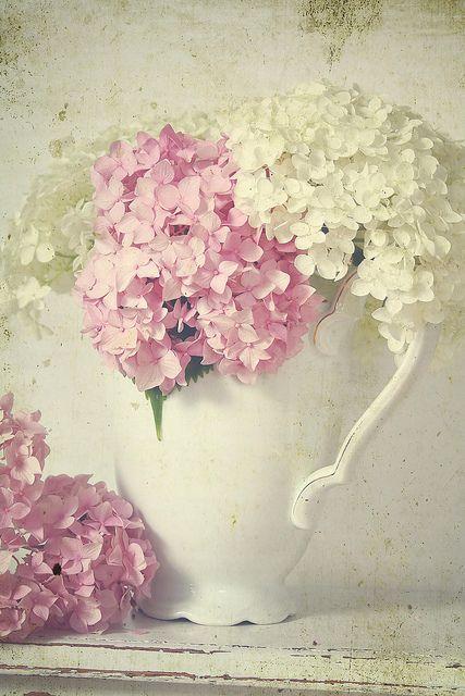 gorgeous pitcher of pink and white hydrangeasPastel, White Flower, Shabby Chic, Vintage Wardrobe, Cobalt Blue, Photos Studios, Ana Rosa, Pink, Hydrangeas