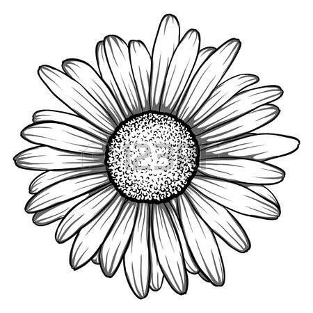 dessins marguerites: belle monochrome, en noir et blanc fleur de marguerite…