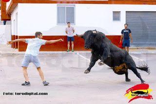 torodigital: Arrancaron los festejos taurinos en barrio de Tex...