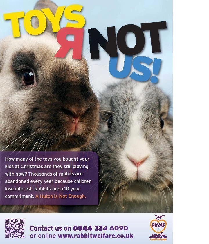 102 best Rabbit Welfare images on Pinterest  Bunny rabbits House