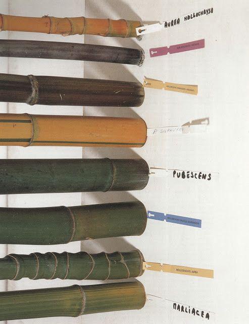 bamboo types