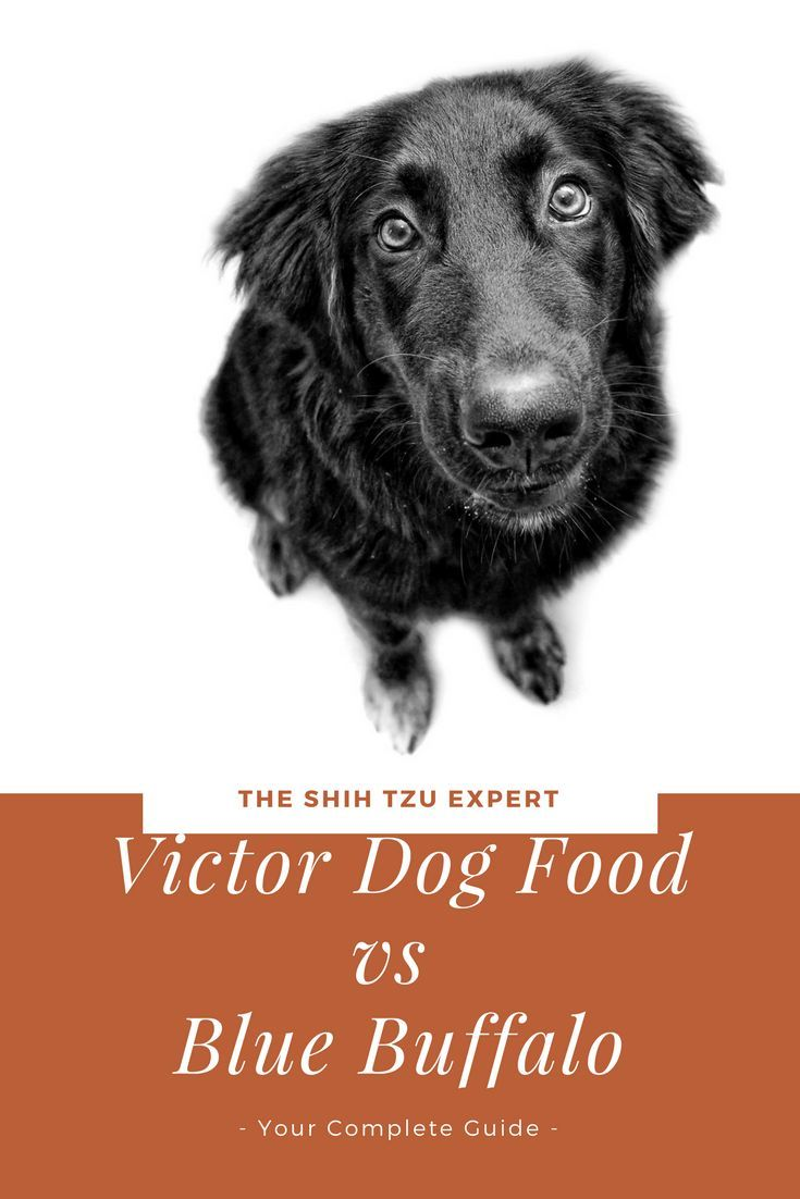 Victor Dog Food Vs Blue Buffalo Your Complete Guide In 2019