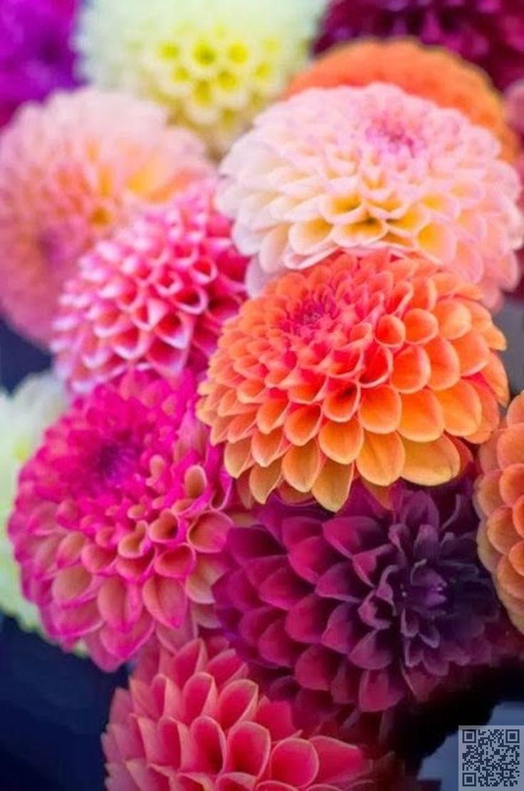 11. #novembre : chrysanthème - #Janvier à décembre : 12 mois de #fleurs…