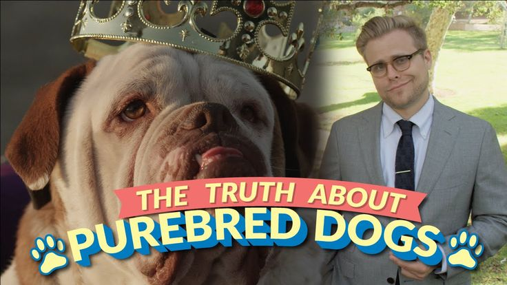 The Bizarre Truth About Purebred Dogs (and Why Mutts Are Better) - Weirdest college humor I have ever seen but wonderful! This is exactly how i feel about purebreds!