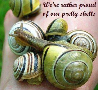 Organic garden snail control - yellow and black garden snails