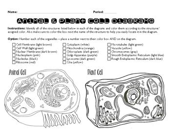 Plant and Animal Cell Coloring Page | Plant and animal ...