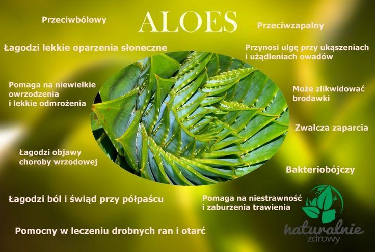 Aloes - właściwości i zastosowanie http://naturalniezdrowy.com.pl/aloes-zielony-sukulent/