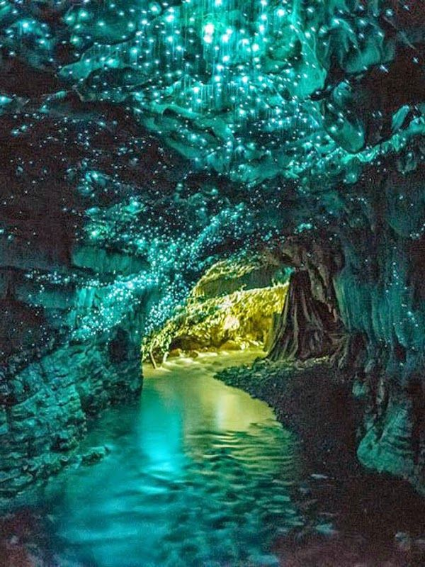 Waitomo Glowworm Caves, New Zealand. Magical.