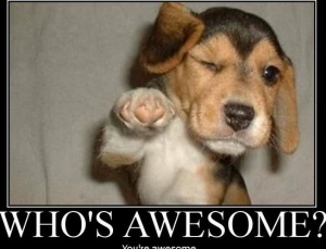6 Reasons Your Life Is...Wait for It...AWESOME!: Volleyb Quotes, Dogs, Motivation Sayings, Demotivational Posters, Funny, Covers Letters, Dr. Who, Animal Memes, You'R Awesome