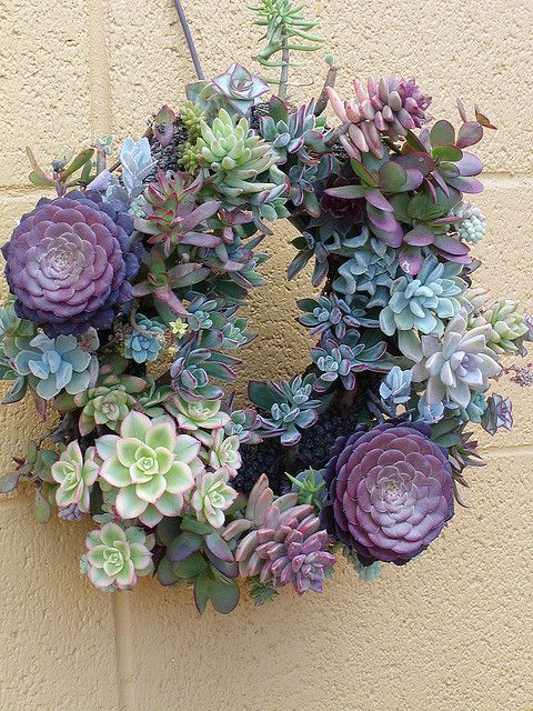 Instructions: sweet!  Living Wreath – How to make a living wreath with succulents Almost a flower.
