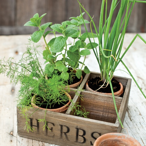 Four Herb Pots - NEW            These terracotta pots have such a charming old rustic feel that they appear positively archaeological. And all contained in a wooden box with a great vintage look. Pot Dia 10 cm. Herb lovers might also like our Glass Teapot.                                    £35