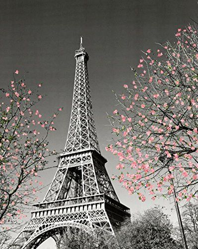Paris Eiffel Tower Blossoms Decorative Photography Travel City Poster Print, Unframed 16x20